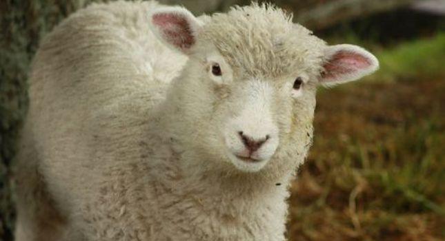 «Δεν σταματάμε να θυσιάζουμε πρόβατα»