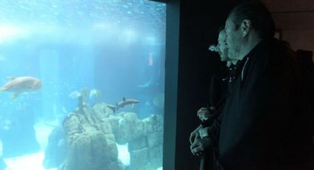 Στους καρχαρίες ο ΠΑΟΚ! (pic, video)
