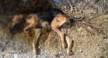 Εκτέλεσαν σκύλο κοντά στον Αλμυρό ποταμό Ηρακλείου