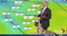 Σκύλος κάνει άνω-κάτω το δελτίο καιρού