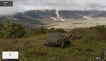 Άγρια χελώνα μπροστά από το Ηφαίστειο Αλκέντο στα νησιά Γκαλαπάγκος