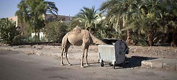 Περιοχή «φάντασμα» το Σαρμ Ελ Σέιχ: Μόνο καμήλες και λιγοστοί ντόπιοι κυκλοφορούν στους δρόμους