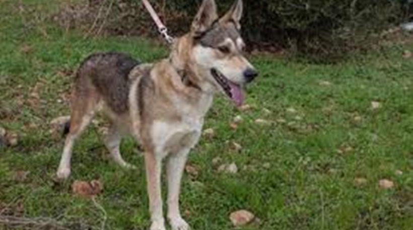Επίθεση σκύλου σε 8χρονο και στην Πτολεμαΐδα