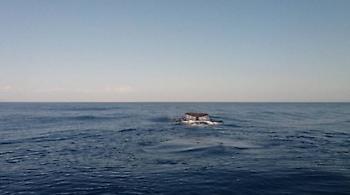 Όλο και πιο συχνές οι... επισκέψεις φαλαινών στα νερά της Κρήτης