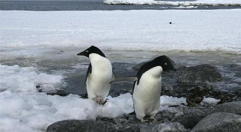 Ασυνήθιστα «λίγοι» οι πάγοι σε Αρκτική και Ανταρκτική