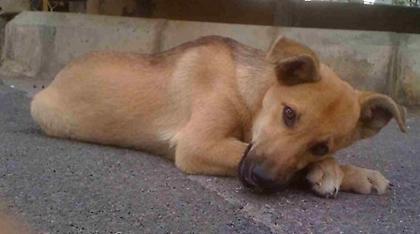 Ροδόπη: 78χρονος χτύπησε με ξύλινο αντικείμενο σκύλο και τον σκότωσε