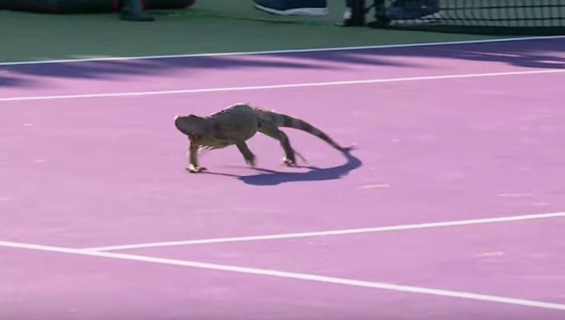 Ο πιο άκυρος... επισκέπτης σε αγώνα τένις (video)