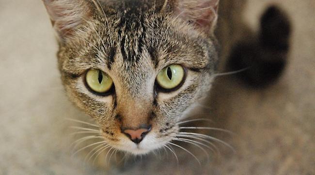 Απάνθρωπο: Πελάτης ταβέρνας σκότωσε γάτα πατώντας της το κεφάλι