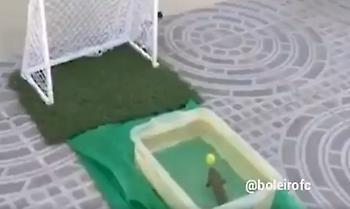 Στη Βραζιλία βάζουν γκολ και τα ψάρια (video)
