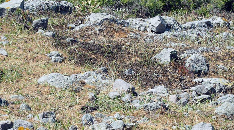 Φωτογραφίες: Εκατομμύρια ακρίδες «κάλυψαν» τον Άγιο Ευστράτιο