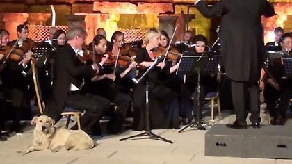 O σκύλος που έκλεψε την παράσταση στην Τουρκία (video)