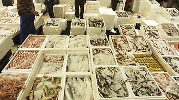 «Ηχηρό ναι» από τους καταναλωτές στα ελληνικά φρέσκα ψάρια
