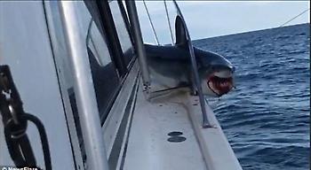 Απίστευτο: Καρχαρίας πήδηξε σε σκάφος και παγιδεύτηκε! (video)