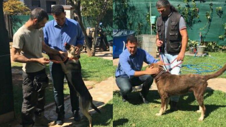 Πρόγραμμα υιοθεσίας αδέσποτων ζώων που τραυματίστηκαν στις φωτιές