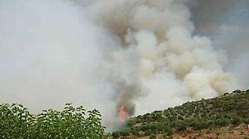 Ηλεία: Ζωντάνεψε τον εφιάλτη του 2007 η μεγάλη πυρκαγιά στη Ζαχάρω