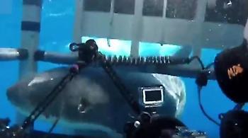 Βίντεο: Δύτες είδαν από κοντά τα «σαγόνια του καρχαρία»