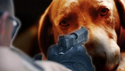 Εντοπίστηκε από την ΕΛ.ΑΣ., ο δράστης που πυροβόλησε σκύλο