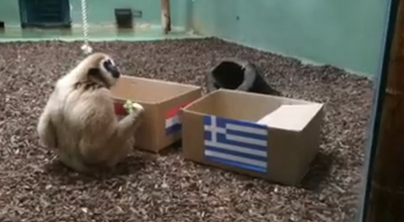 Μαϊμού στο Ζάγκρεμπ προέβλεψε τον νικητή του Κροατία-Ελλάδα (video)