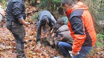Διασώθηκε αρκούδα που είχε πιαστεί σε παράνομη παγίδα στην Πίνδο