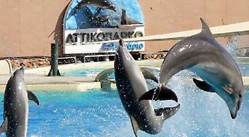 Στον εισαγγελέα για τις επιδείξεις δελφινιών το Αττικό Ζωολογικό Πάρκο-Τι συνέβη