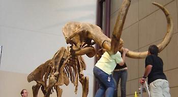 Γαλλία: Σκελετός μαμούθ «έπιασε» 548.000 ευρώ σε δημοπρασία
