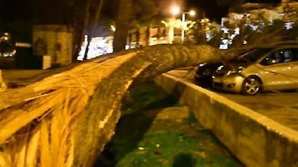 Έπεσαν δέντρα και πλάκωσαν αυτοκίνητα στο Ναύπλιο (pics-video)