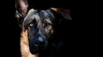 Αυτό είναι είδηση: Άνθρωπος δάγκωσε -αστυνομικό- σκύλο στις ΗΠΑ!