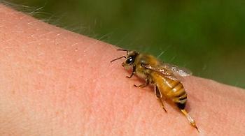 Κρήτη: Ηλικιωμένος κινδύνευσε να πεθάνει από τσίμπημα μέλισσας