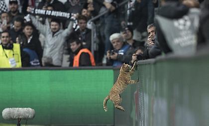 Μια γάτα διέκοψε το παιχνίδι Μπεσίκτας-Μπάγερν και βγήκε MVP! (pics)