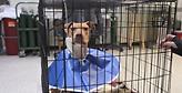 Έδωσαν κοκαΐνη σε σκύλο στη Φιλαδέλφεια