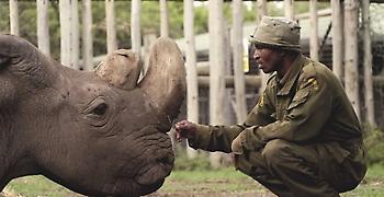 Πέθανε στην Κένυα ο τελευταίος αρσενικός λευκός ρινόκερος του Βορρά