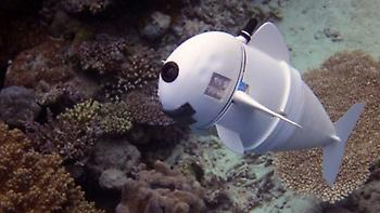 Ενα ψάρι που το λένε SoFi ερωτοτροπεί στον βυθό