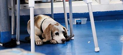 Φιλόζωοι: Πώς το νομοσχέδιο για σκύλους-γάτες θα «πνίξει» τη χώρα στα αδέσποτα