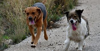 Σε δημόσια διαβούλευση το νoμοσχέδιο για τα δεσποζόμενα και αδέσποτα ζώα