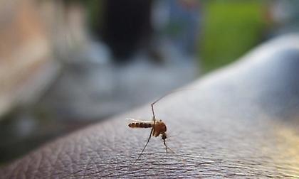 Έρχεται η πρώτη εφαρμογή κινητού που θα σε προειδοποιεί όταν πλησιάζει... κουνούπι!