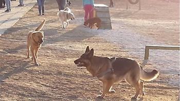 Κρήτη: Το πρώτο πάρκο για σκύλους εγκαινιάστηκε στο Ηράκλειο
