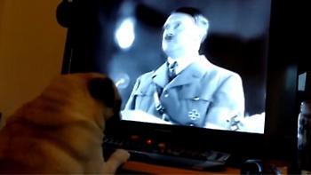 Πρόστιμο 950 ευρώ σε ιδιοκτήτη που έμαθε τον σκύλο του να... χαιρετά ναζιστικά! (video)