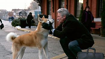 «Χάτσικο»: Η διάσημη ράτσα σκύλων έχει μεγαλύτερη ζήτηση στο εξωτερικό παρά στην Ιαπωνία