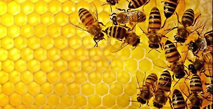 20ή Μαΐου Παγκόσμια Ημέρα των Μελισσών