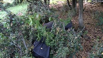 Θεσπρωτία: Έκρυψαν στους θάμνους 66 κιλά χασίς