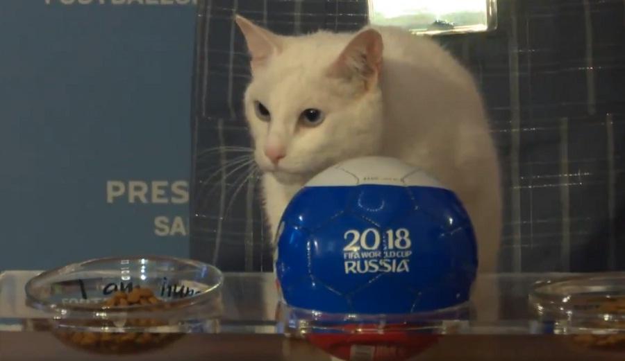 Ο γάτος-μέντιουμ προέβλεψε το νικητή της πρεμιέρας στο Μουντιάλ (video)