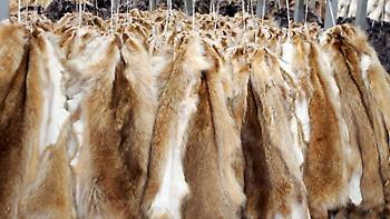 Καστοριά: Εξαρθρώθηκε σπείρα με διεθνή δράση που έκλεβε πανάκριβες γούνες
