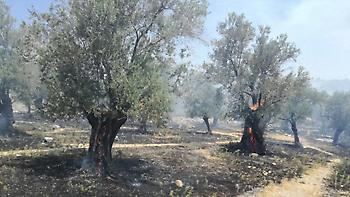 Μυτιλήνη: 10 στρέμματα ελαιοκαλλιεργειών κάηκαν από πυρκαγιά στη Μόρια