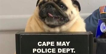 Συνελήφθη σκύλος ράτσας Παγκ για καταπάτηση ξένης ιδιοκτησίας