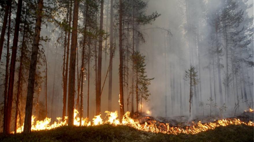 Τεράστιες πυρκαγιές στη Σουηδία - Καύσωνας στην Φινλανδία