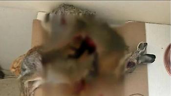 Κυνηγούσαν λαγούς με θηλιές στο Ρέθυμνο