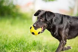 Σκύλος «γλεντά» δύο παιδιά στις ντρίμπλες (video)