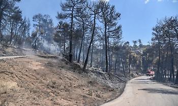 Πυρκαγιά σε δασική έκταση στην Καβησό Φερών στην Αλεξανδρούπολη