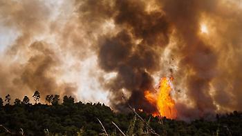 Φωτιά στην Αμαλιάδα: Σε μια χαράδρα δίνουν τη μάχη με τις φλόγες οι πυροσβέστες