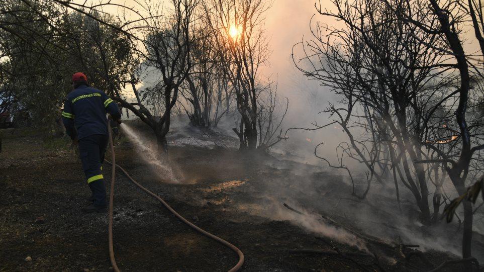 Προφυλακιστέος ο 32χρονος που έβαζε φωτιές στην Εύβοια